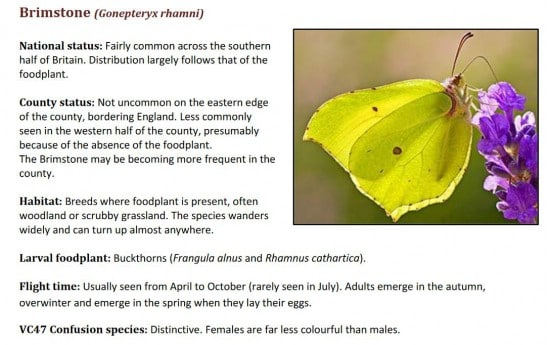 Butterflies of Montgomeryshire (VC47) 2021