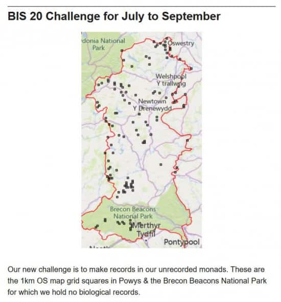 BIS Bulletin July 2021 - Unrecorded Squares