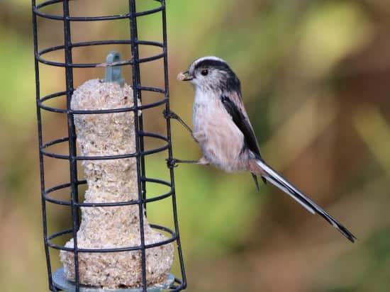 Birds of a Brecon Beacons Garden now on youtube