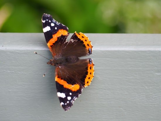 Wales Nature Week Garden Bioblitz & Big Wales Nature Quiz