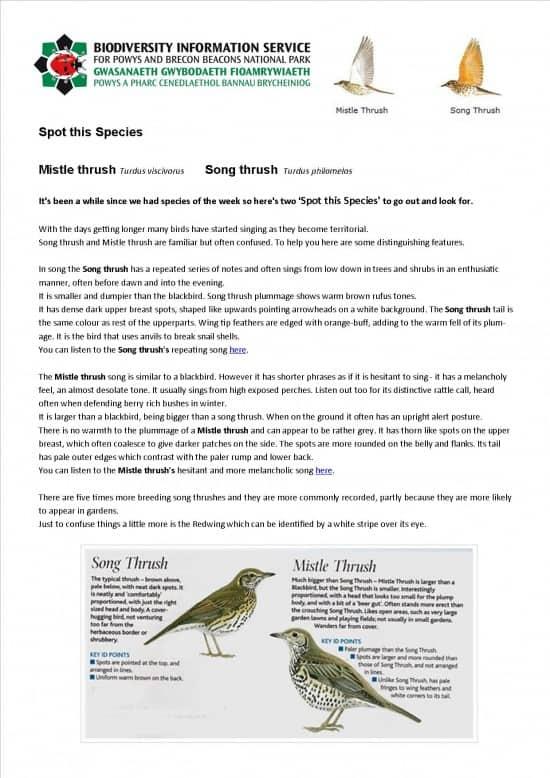 Spot this Species Mistle Thrush & Song Thrush