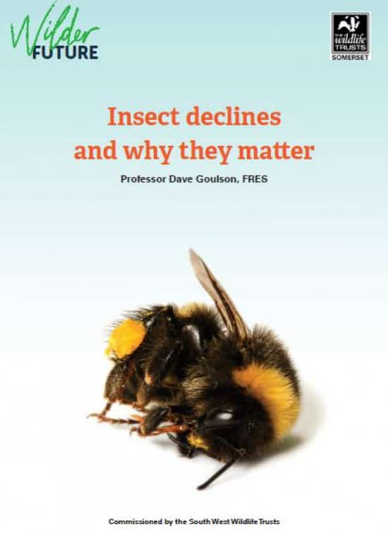 Insect Declines and Why They Matter - a new report