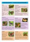 Spot these Species - Grassland butterflies